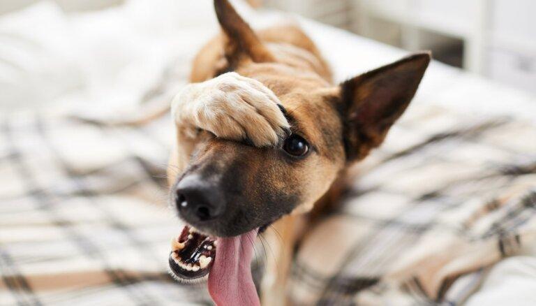 Сделки в приграничных кустах. Как налажен бизнес нелегальных перевозок домашних животных?