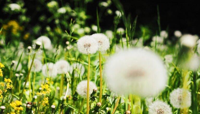 Kas darāms dārzā no 1. līdz 8. jūnijam?