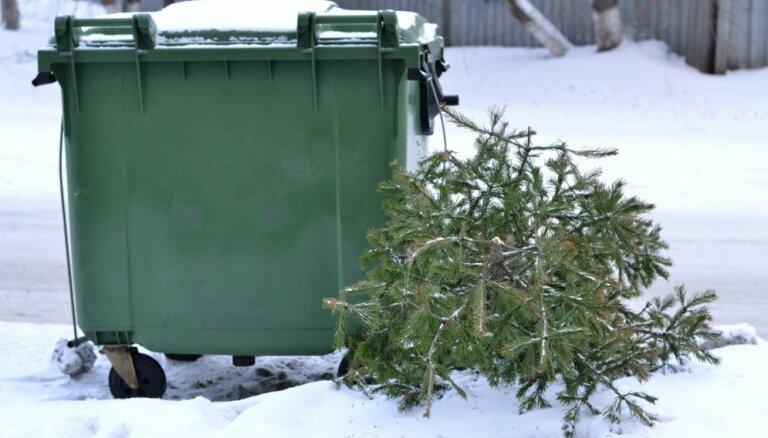 Без проблем и лишней грязи - как правильно выкинуть елку