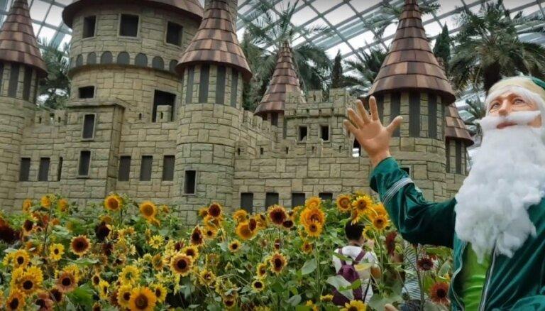 Video: Saulespuķu paradīze futūristiskajos līča dārzos Singapūrā