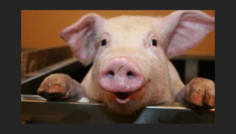 Беларусь ввела запрет на ввоз свинины из Литвы