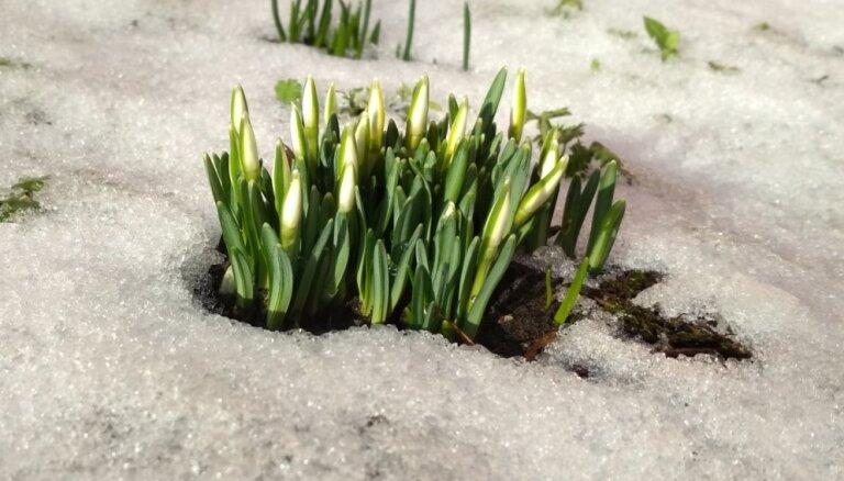 Foto un video: Ziņo 'Delfi Aculieciniekam', kā daba mostas pavasarim!