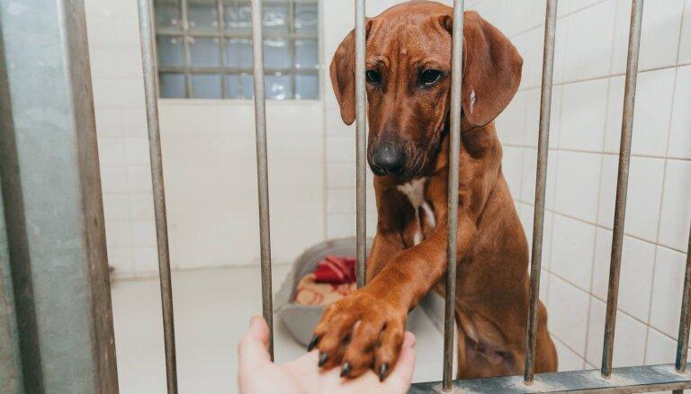 Garais tiesvedības process izņemtajiem dzīvniekiem ilgstoši liedz iespēju tikt pie saimnieka