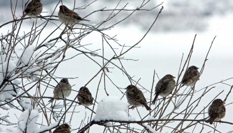 Svētdien brīžiem snigs un pastiprināsies vējš