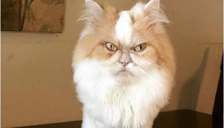 Foto: 'Instagram' cilvēku sirdis iekaro jauns Nīgrais kaķis