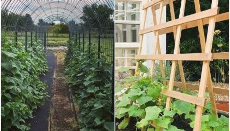 Iedvesmas deva: radoši veidi, kā dārzā audzēt gurķus