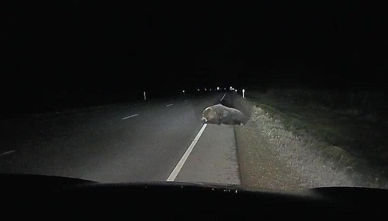 Video: Igaunijā automobilis uz šosejas notriecis lāci
