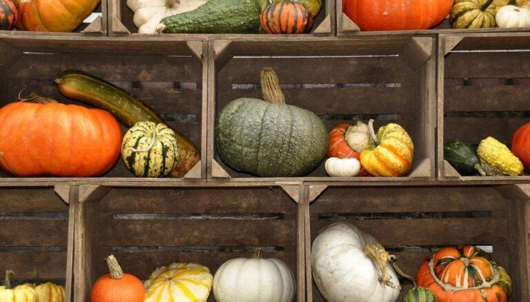 Saulainās rudens ogas ķirbji – piemērotākie audzēšanai Latvijā