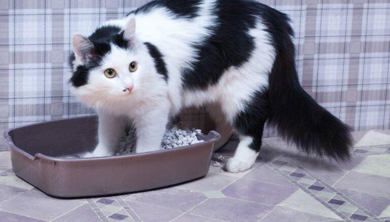 Piecas kļūdas, ko saimnieks pieļauj kaķa kastītes iekārtošanā