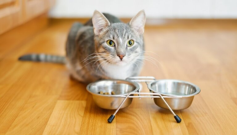 Arī 'Tukuma straumes' ražotajā kaķu barībā konstatēta neatļautā viela karbamīds