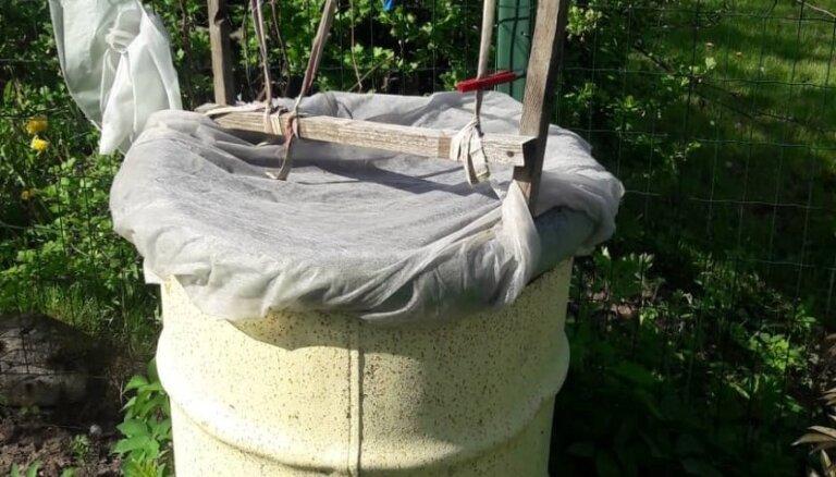 Pieredzes stāsts: kā 200 litru mucā izaudzēt gurķus