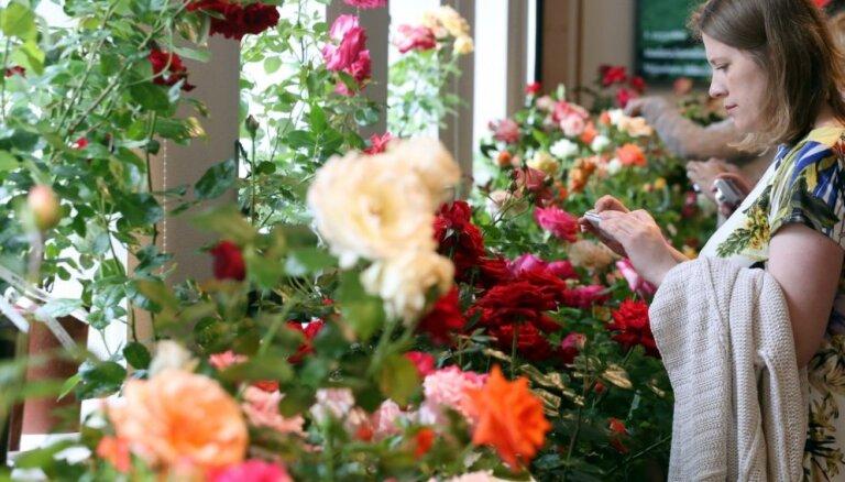 Foto: Graciozo rožu izstāde Dabas muzejā