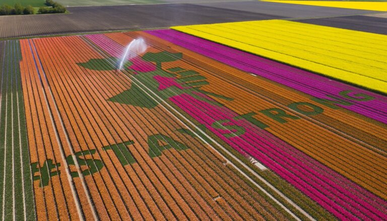 Nīderlandes tulpju audzētāji krāšņajos ziedu laukos izveido emocionālus vēstījumus