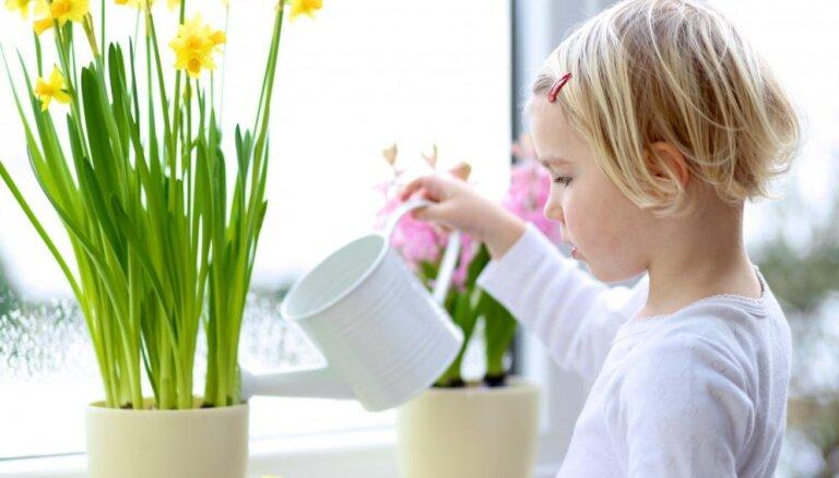 Rīgas Jūgendstila centrā bērniem stāstīs par pavasara ziedu pasauli