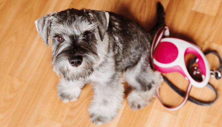 Ne tā labākā izvēle sunim un cilvēkam: eksperti skaidro, kāpēc automātiskā pavada var būt bīstama