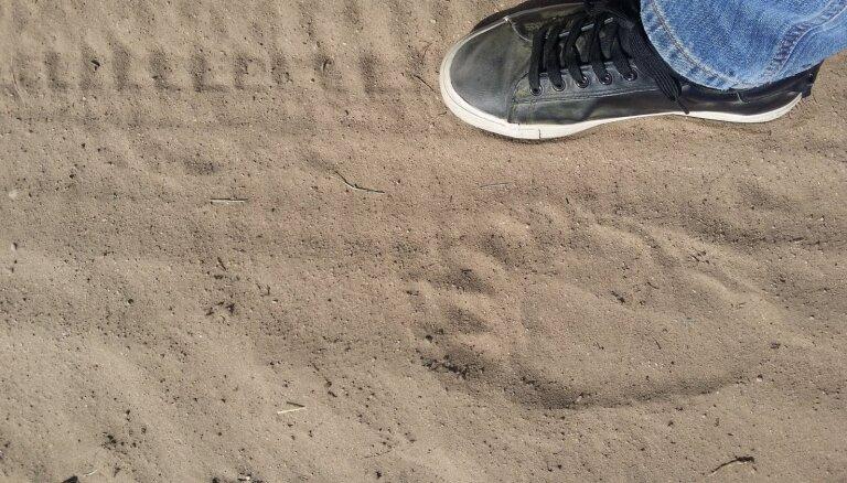 Aculiecinieka foto: Kalsnavā pie privātmājas fiksē lāča pēdas