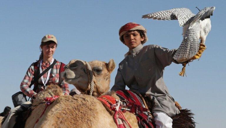 Foto: Simtiem medību piekūnu treneri demonstrē prasmes Abu Dabi tuksnesī