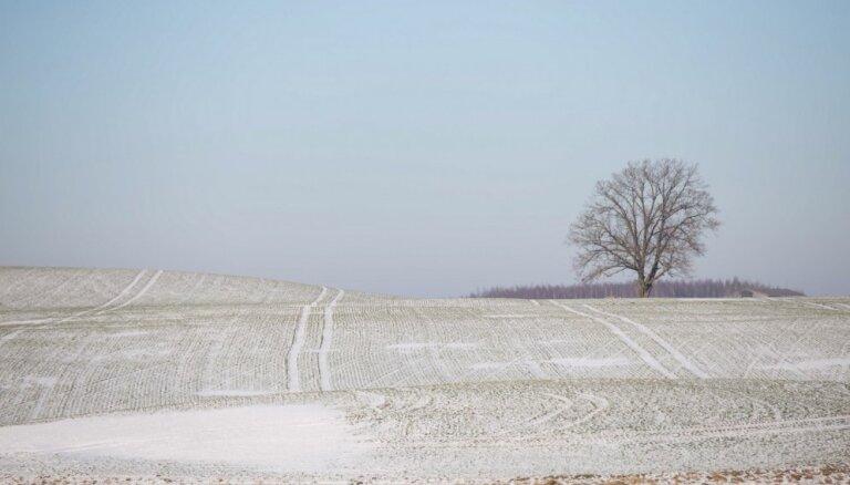 Lauksaimnieki bažīgi par sauso sējumu pārziemošanu