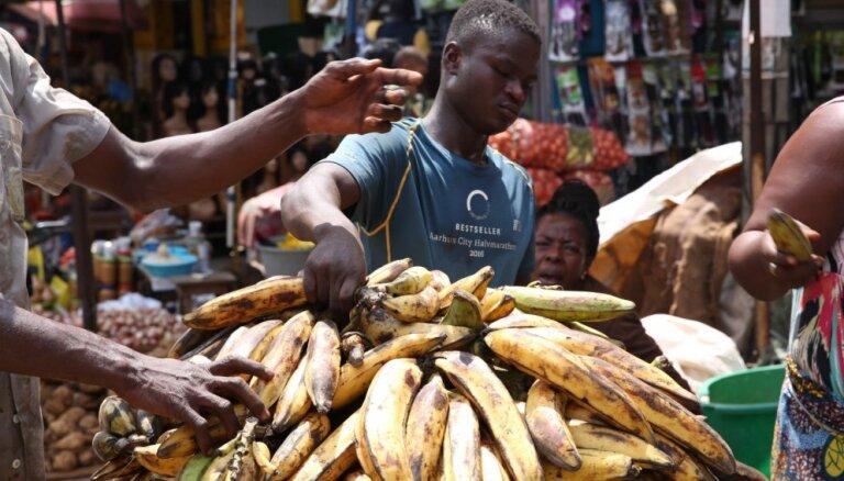 Savvaļas banāni iekļauti Sarkanās grāmatas izzūdošo sugu sarakstā