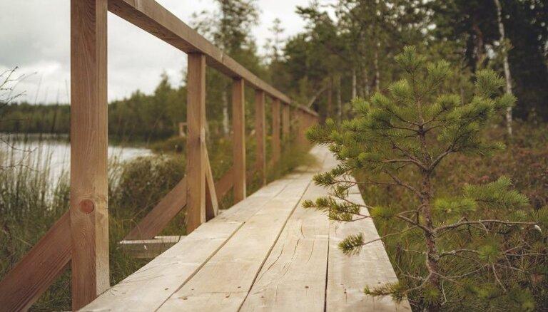 Шесть коротких, но фантастически красивых природных троп в Латвии