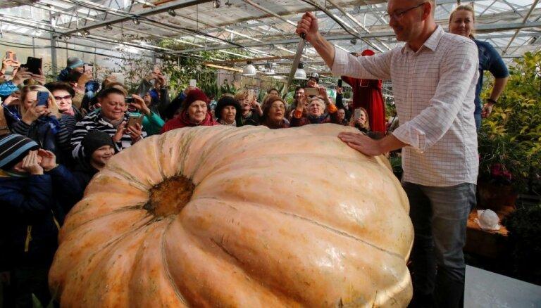 Foto: Krievijā izaudzēts rekordķirbis – 645,5 kilogramus smags milzenis