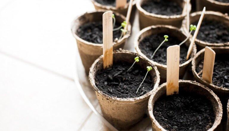 Kartotēka puķu podā: radoši ieteikumi augu nosaukumu indentificēšanai