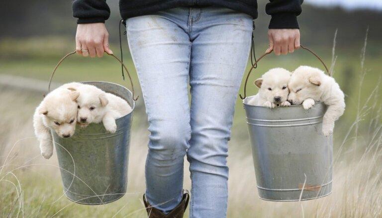 Gribu sunīti: 13 svarīgāki ieteikumi pirms kucēna iegādes