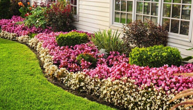 Speciālistes ieteikumi, kā dārzā veidot glītas apdobes ar lāpstu