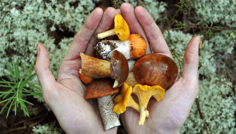 Kā nomazgāt rokas pēc sēņošanas un meža loma ķidāšanas