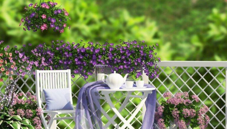 Idejas mazās paradīzes izveidei uz terases vai balkona