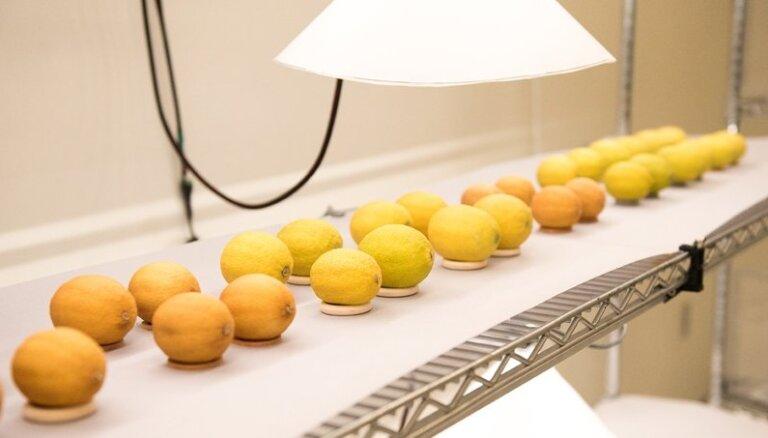 Uzņēmums rada pārklājumu, kas ļauj augļus un dārzeņus ilgāk saglabāt svaigus