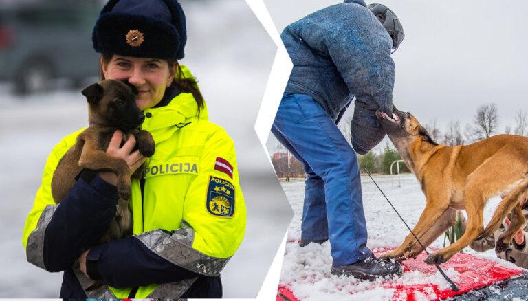 Viņi spēj izdarīt to, ko cilvēks nespēj: Valsts policijas suņu apmācība un ikdiena