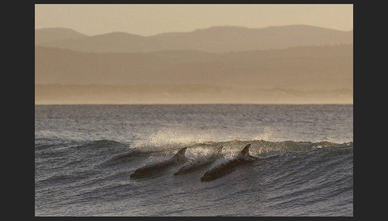 В Балтийском море замечены дельфины: ученые такого еще не видели