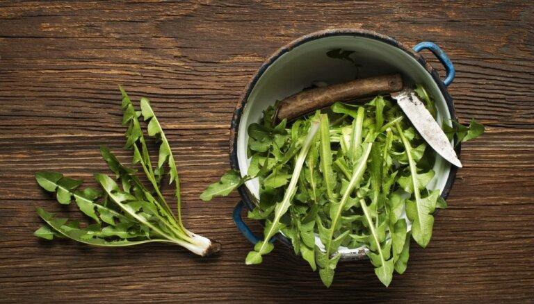 Микробы и плесень: опасность салатов в упаковках