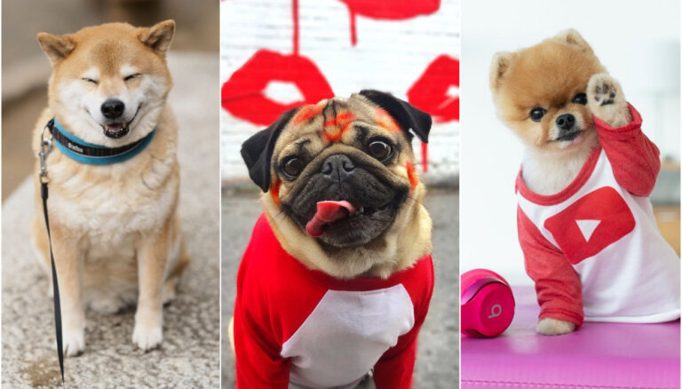 Top 10 visu laiku slavenākie suņi 'Instagram'