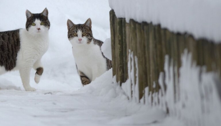 Tuvākajās dienās sniegs nokusīs gandrīz visā Latvijā