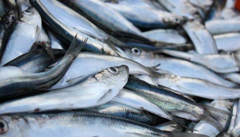 Квоты закончились: остановлен вылов салаки в Рижском заливе от Юрмалы до Саулкрасты