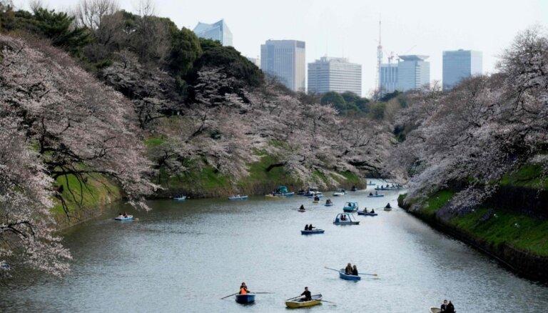 Krāšņi foto: Vašingtonā un Japānā sākuši ziedēt ķirši