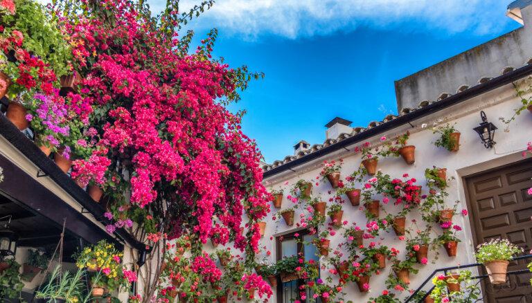 ФОТО. Обнять и пахнуть: уникальные цветущие дворики Кордовы