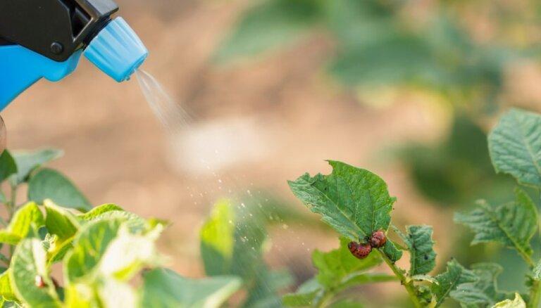 Rūpes par augu veselību – kaitēkļu apkarošana bez ķimikālijām