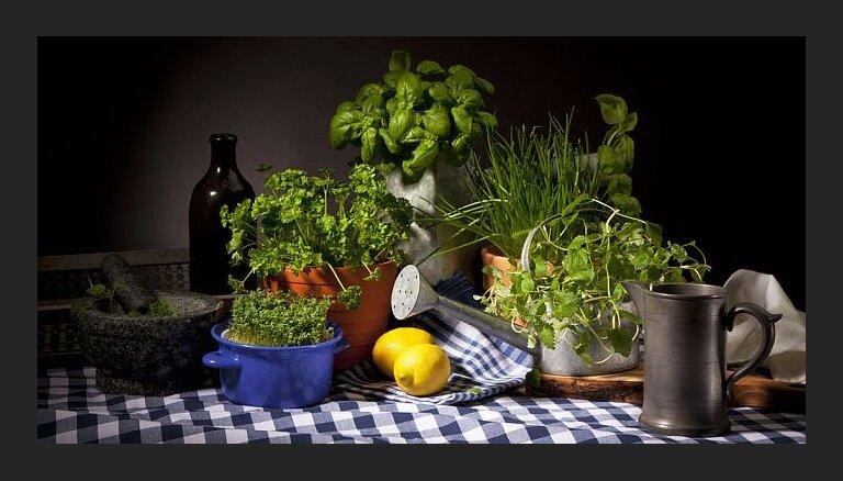 Brīnumainās mētras ar zemeņu, ābolu, persiku vai ananasu garšu, ko var audzēt arī podiņā uz palodzes