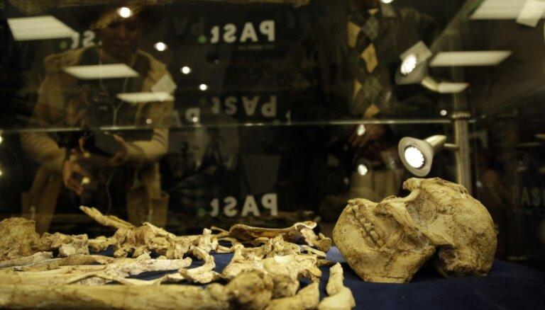 Foto: Apskatei izliek pilnīgāko miljongadīga hominīda Mazā Kāja skeletu