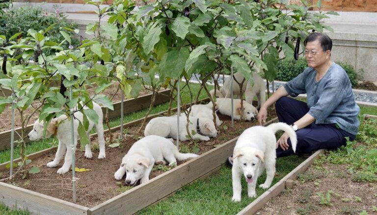 Muns rosina aizliegt suņu ēšanu