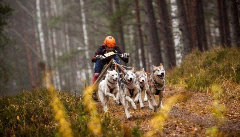 ФОТО: Латвийские спортсмены и их собаки одержали четыре победы на ЧМ по ездовому спорту