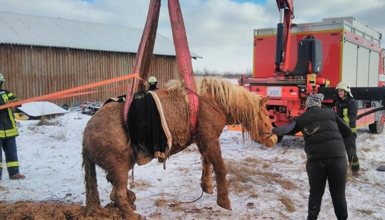 Foto: Siguldas novadā izglābj dubļu bedrē iestigušu ķēvi