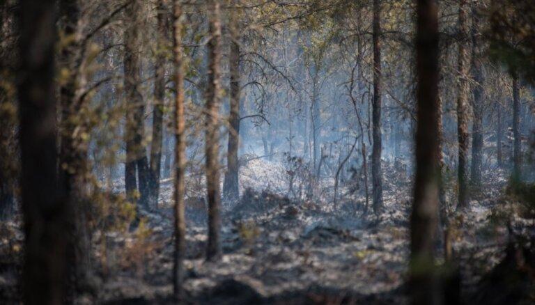 Šogad Latvijā divkārt pieaudzis meža ugunsgrēku skaits