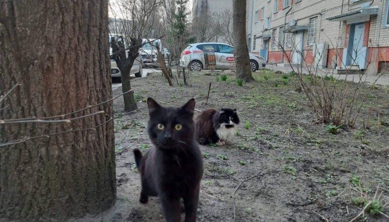 Жители Пардаугавы боятся, что вместе с крысами отравят колонию уличных котов