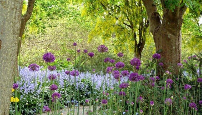 10 koki un krūmi, kas krāšņi zied tieši jūnijā