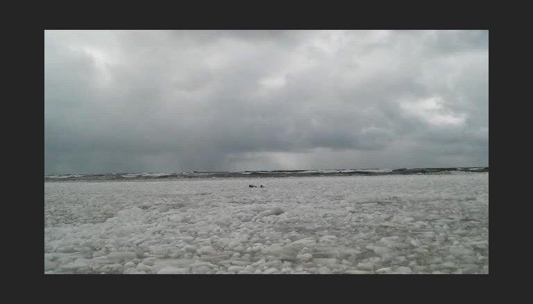 Foto svarīgāks par dzīvību. Speciālisti brīdina – roņiem Ventspilī tuvoties nevajag