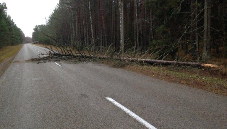 Разгул стихии: на автобус Lux Express , следовавший из Риги в Таллинн, упало дерево